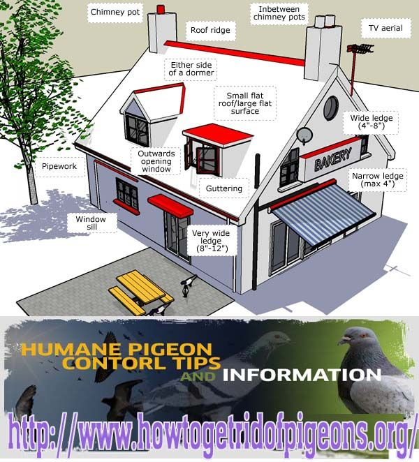 How To Get Rid Of Pigeons Http Www Howtogetridofpigeons Org Get Rid Of Pigeons Tv Aerials Pigeon