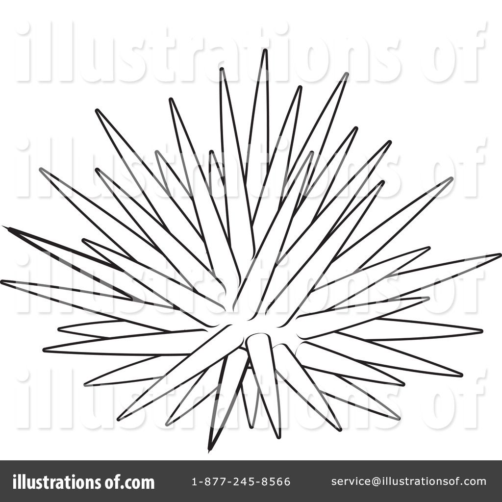 How To Draw Sea Urchin Sea Urchins Art Cartoon Coloring Pages Drawings