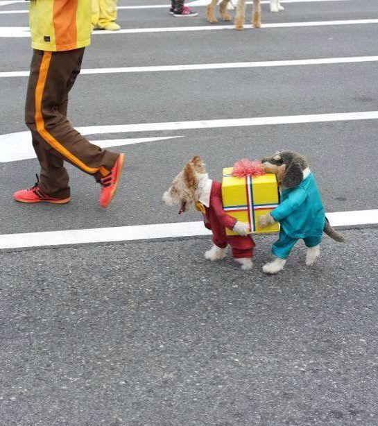 carnavals pakje voor hond :)