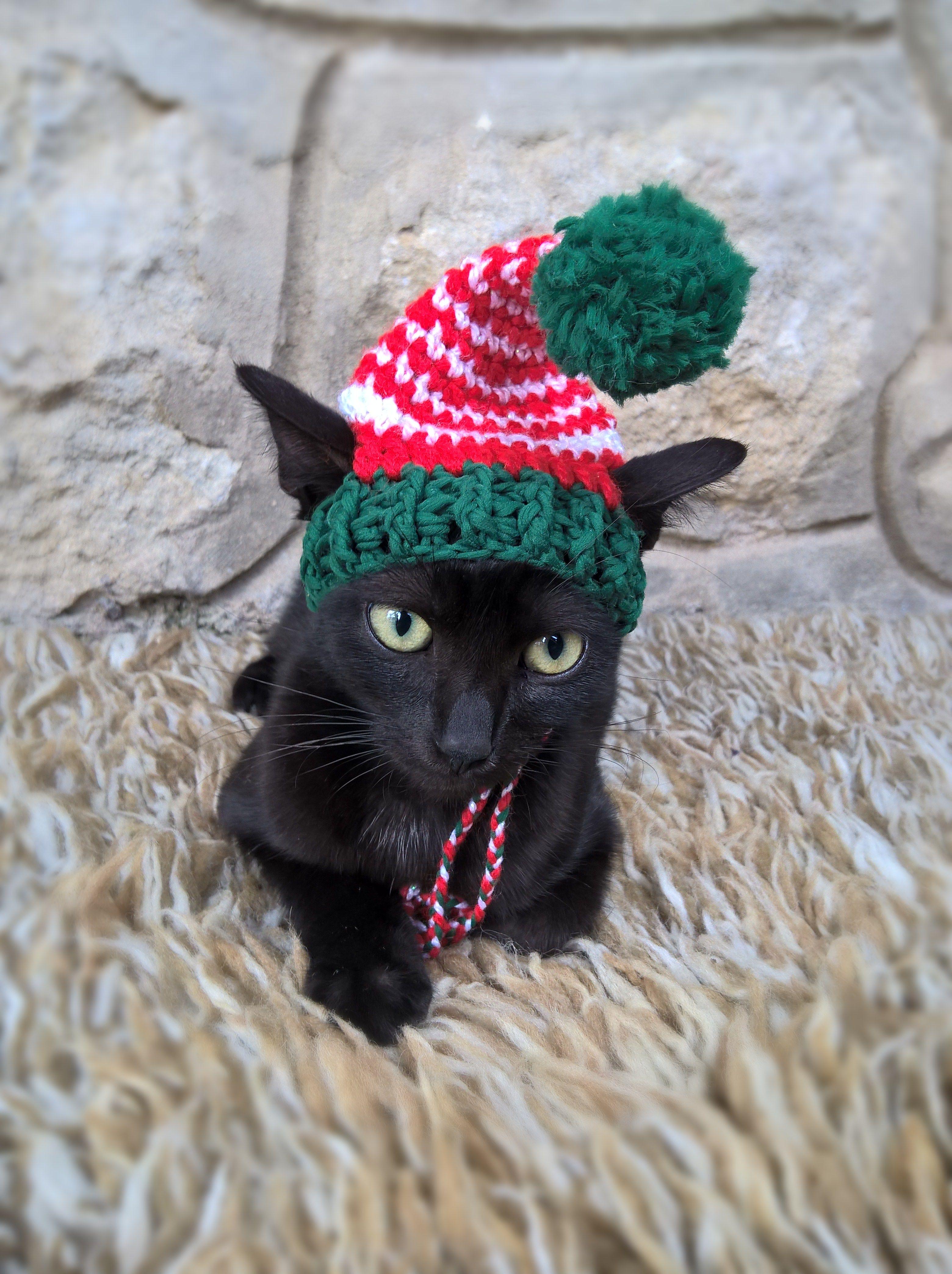 Santa's new little helper Crochet pet costumes, Cat