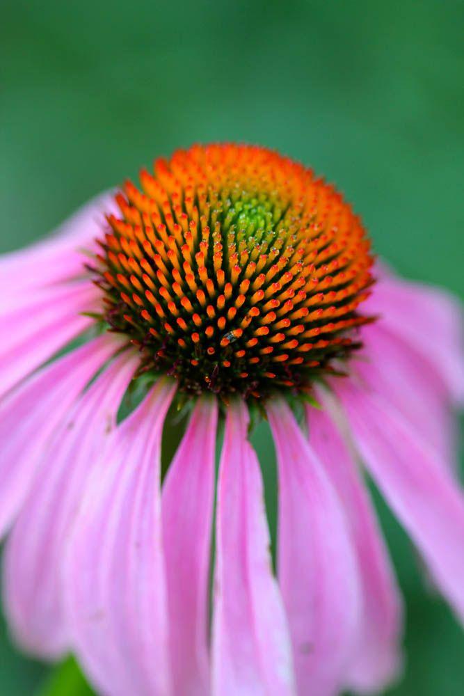 Garden Bush: 10 Medicinal Herbs For The Garden