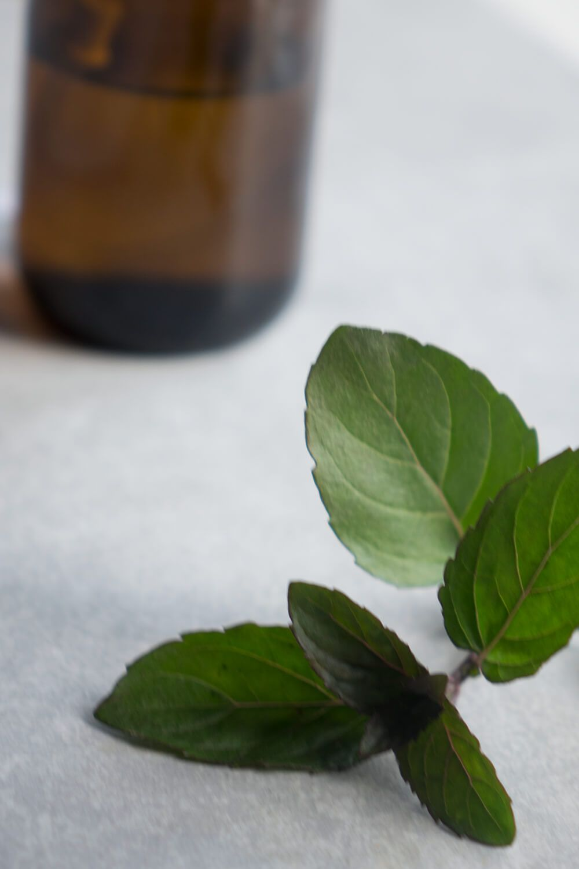 Jak Poradzic Sobie Z Muszkami Owocowkami Plant Leaves Health Plants