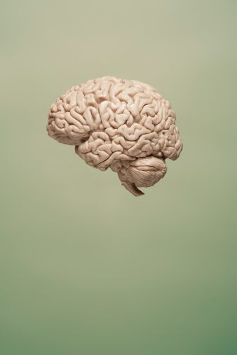 'Game-Changing Discovery Links the Brain and the Immune System' by Alissa Greenberg