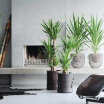 Choisir ses plantes d 39 int rieur en fonction de la pi ce de for Achat plante interieur