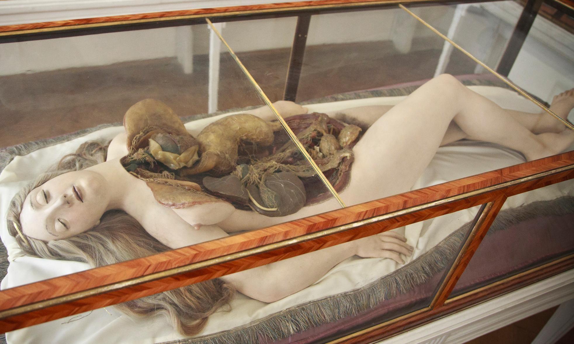 Cadavers in pearls: meet the Anatomical Venus | ART | Pinterest