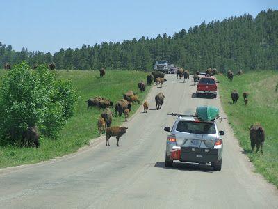 Black Hills South Dakota | Norton-USA-travels: Black Hills of South Dakota