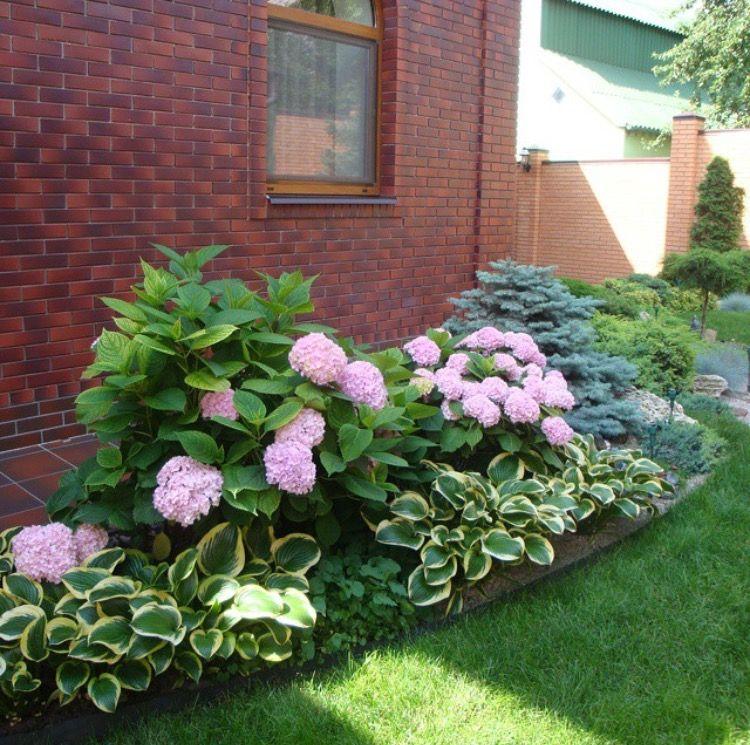 hydrangeas and hostas front porch
