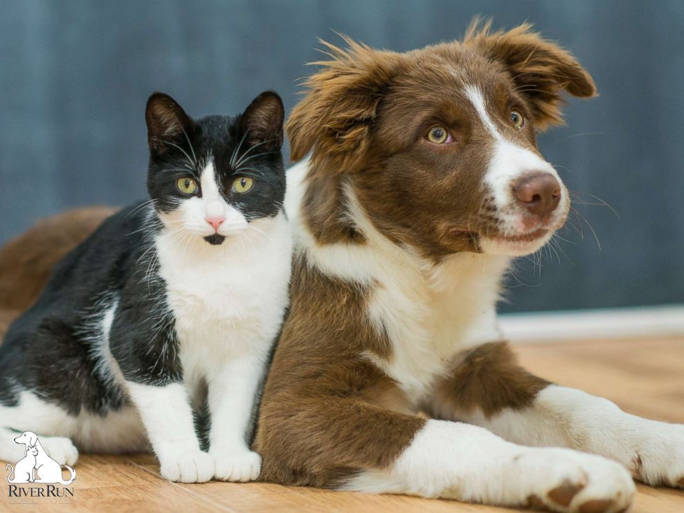 Do you have a dog or cat? Take them to River Run Animal