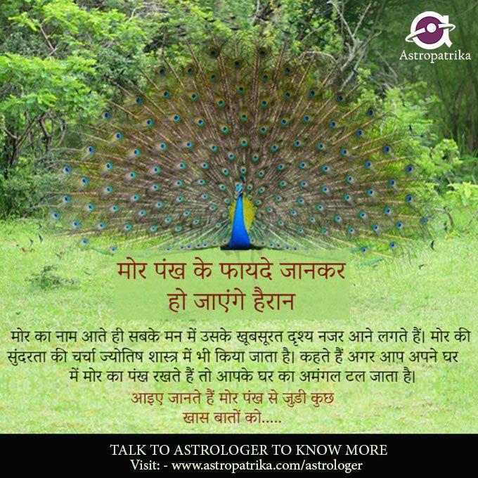 Photo of मोर पंख के फायदे जानकर हो जाएंगे हैरान…