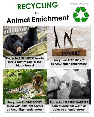 Recycling As Animal Enrichment Wildlife Rehabilitation Enrichment Zoo Animals