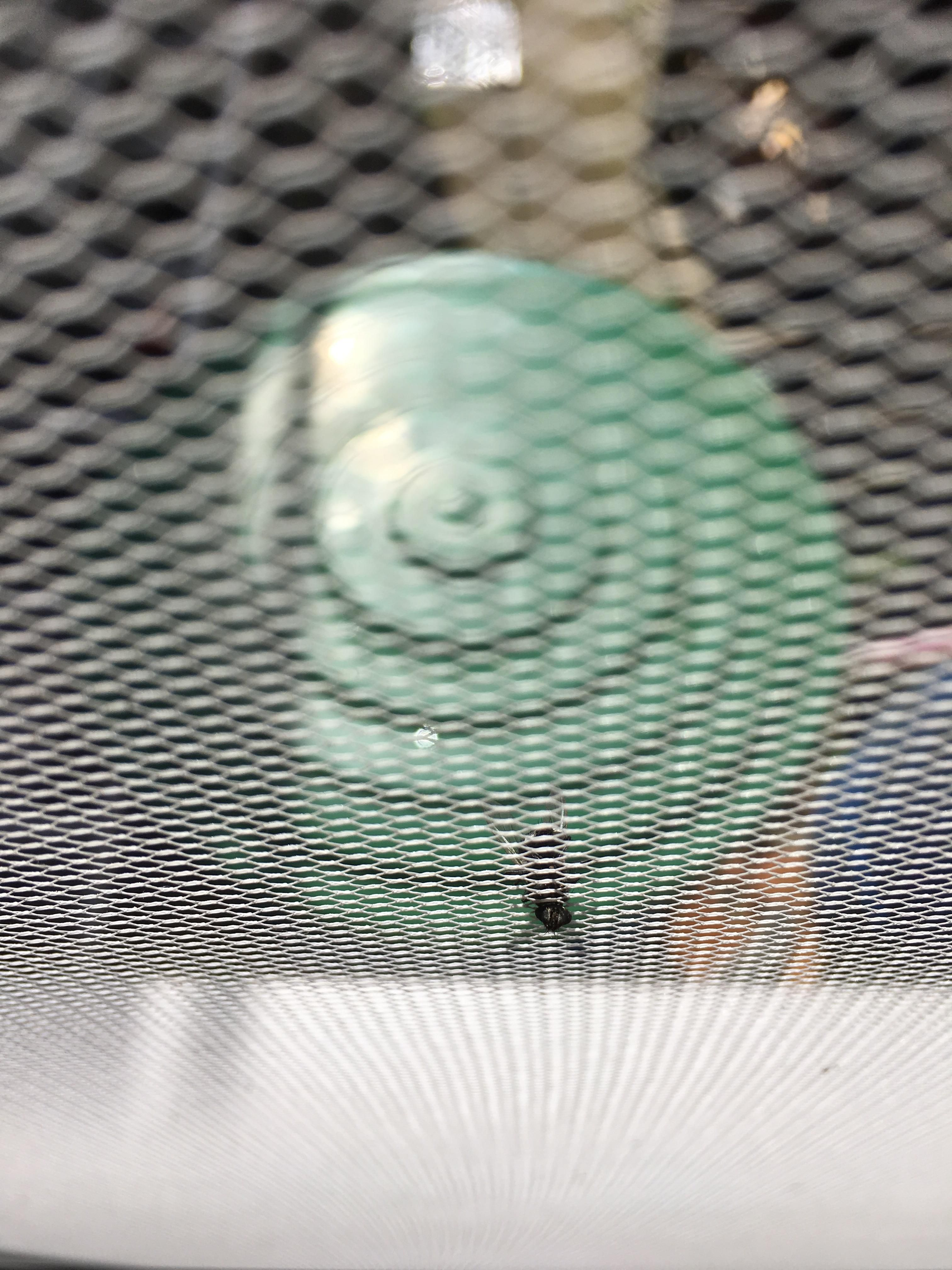 A fly landed head first in our fly screen Engagement