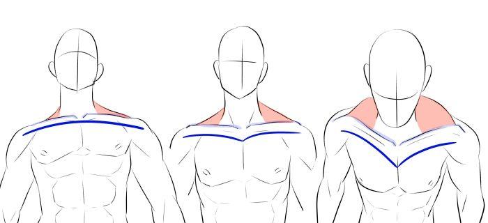体の描き方雰囲気で描く上半身の筋肉肩脇鎖骨の動き 面倒くさ