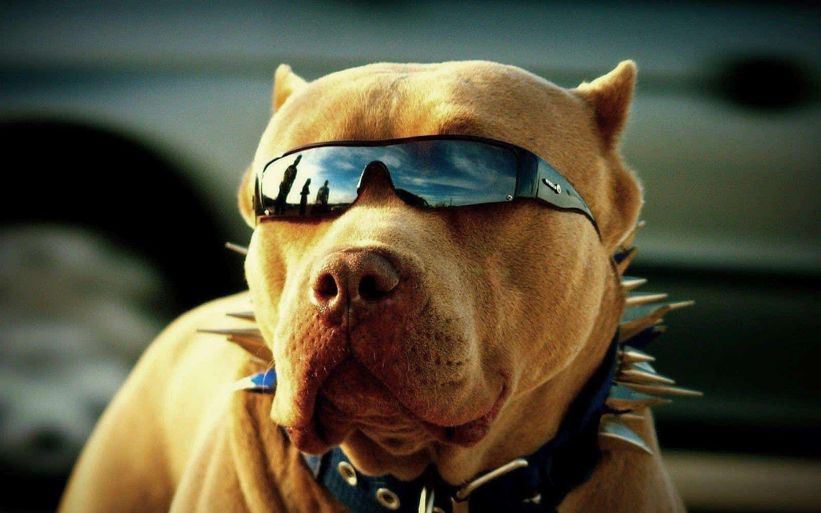 Cool Wallpapers Of Dogs Http Jazzwallpaper Com Cool Wallpapers Of Dogs Hd Wallpapers Cute Dog Wallpaper Pitbulls Dog Wallpaper