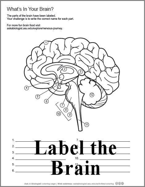 One Of Many Body Downloads Homeschool Biology Biology