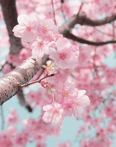 見ぬが花。