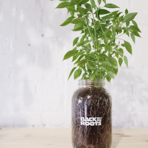 Self-Watering Planter #selfwatering