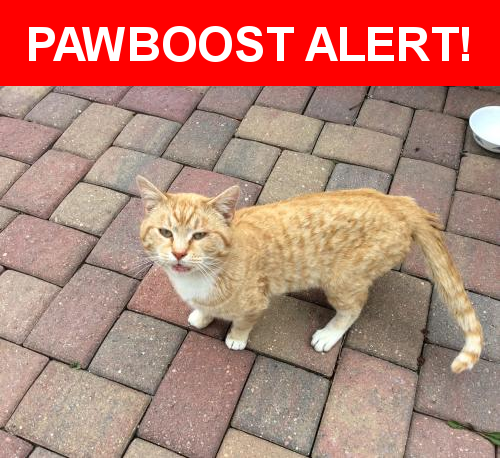 Pin On Found Cats