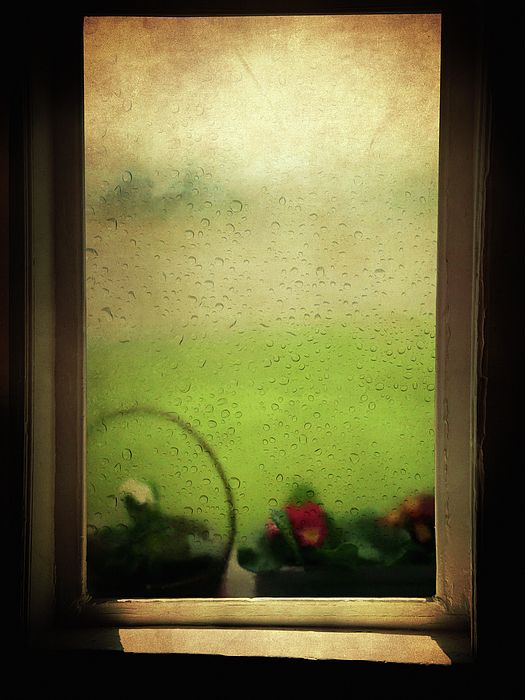 window, window flowers, rain, rainy day, rainy window, rain ...