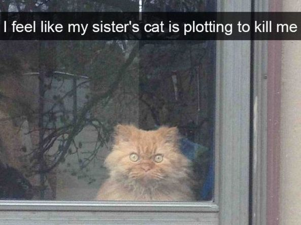 Funniest Meme Pages On Snapchat : 30 funny snapchat cats funny snapchat snapchat and funny animal