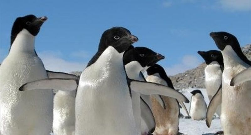 Iceberg wipes out 150,000 Antarctic penguins