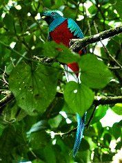 Bird watching tour in Costa Rica.  There are over 700 species in our small country!
