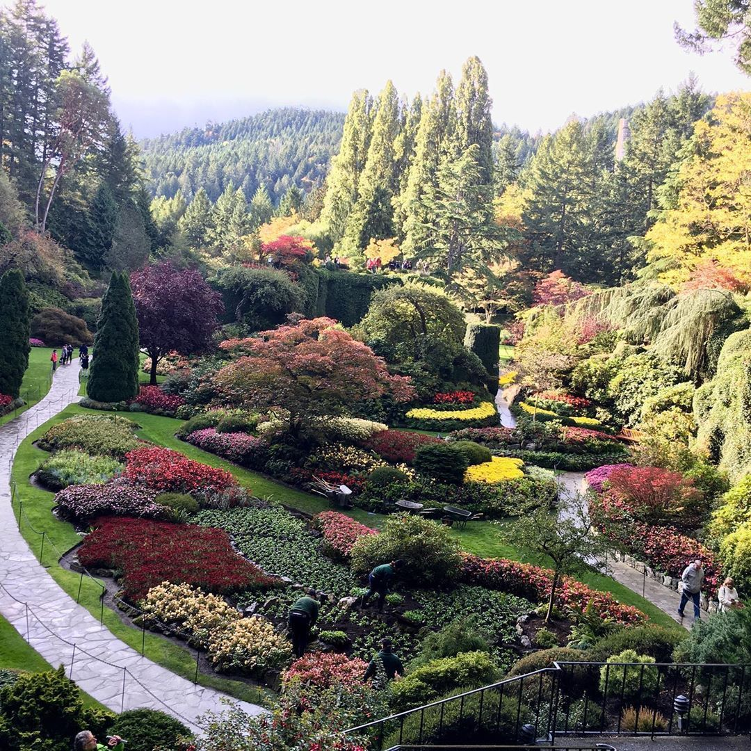 The sunken garden at world famous Butchart Gardens near Victoria, British Columbia, Canada. From @amayesingarden Follow us @ourlovelygarden for more beautiful garden photos! #butchartgardens The sunken garden at world famous Butchart Gardens near Victoria, British Columbia, Canada. From @amayesingarden Follow us @ourlovelygarden for more beautiful garden photos! #butchartgardens