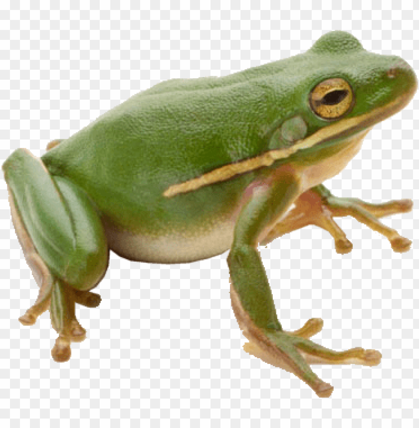 Download Frog Png Images Background Png Free Png Images Png Images Free Png Frog