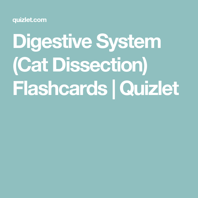Digestive System (Cat Dissection) Flashcards | Quizlet | Anatomy and ...