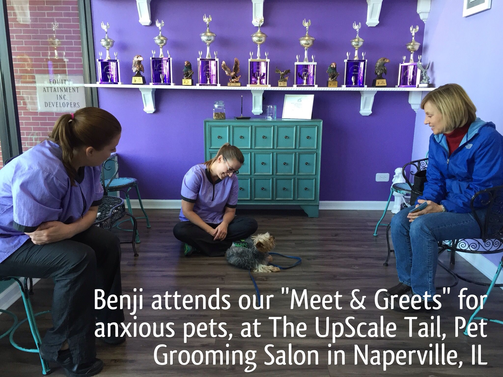 "FREE ""Meet & Greets"" for anxious pets at our salon.  www.theupscaletail.com"