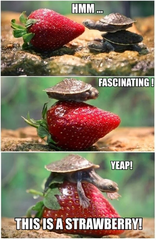 Turtle funny - photo#47