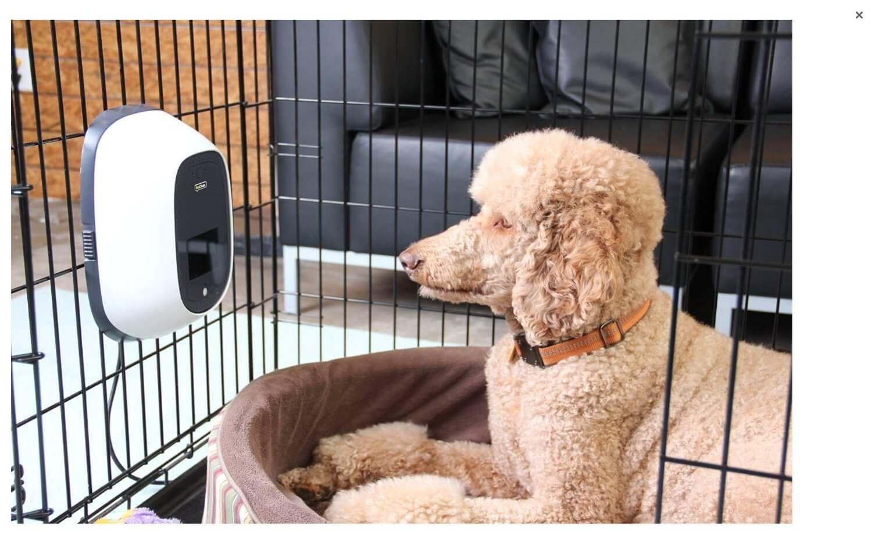 Automatic Dog Treat Dispenser Dog Treat Dispenser Pet Businesses Pet Camera