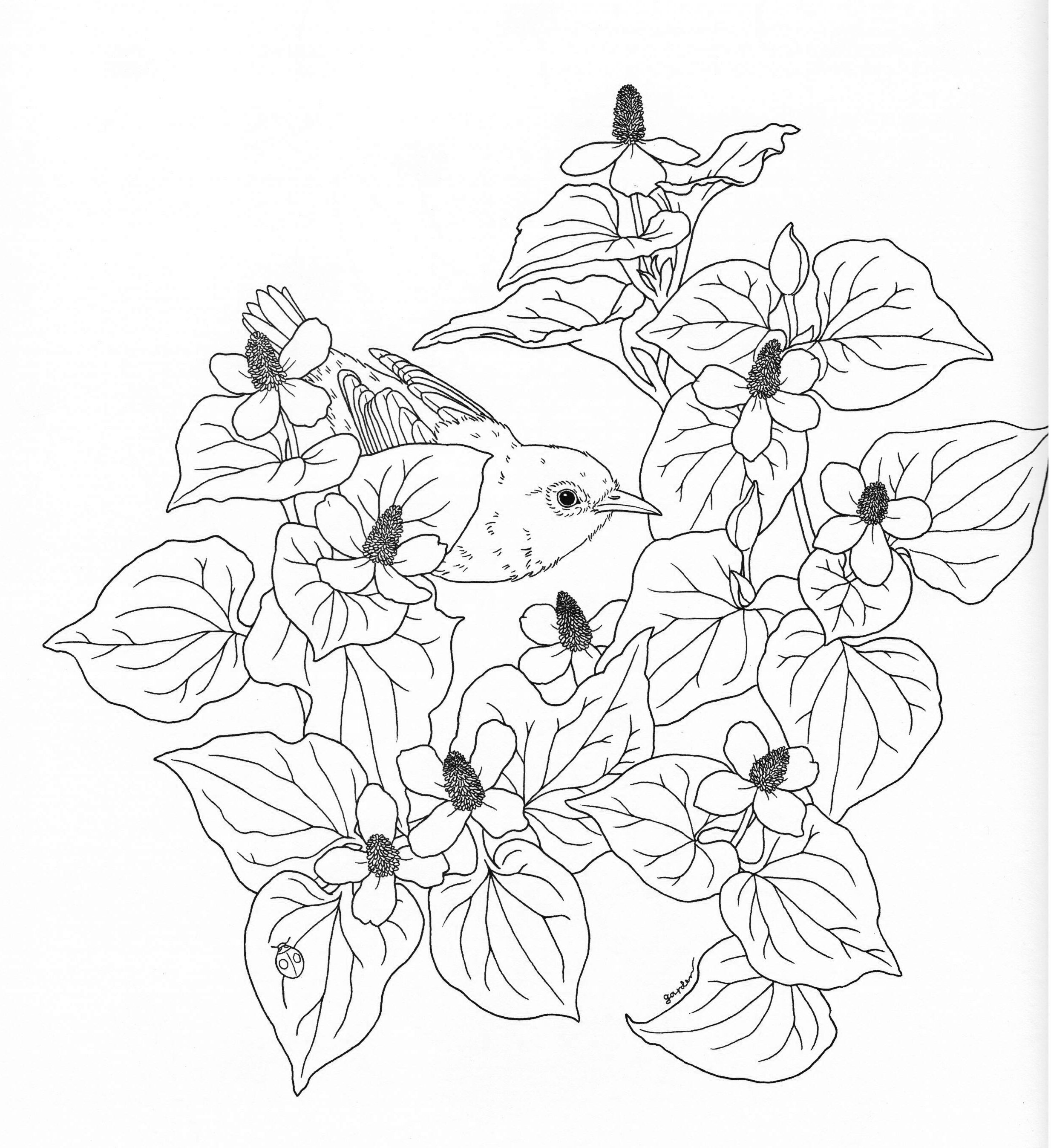 harmony of nature coloring book pg 24 color pages