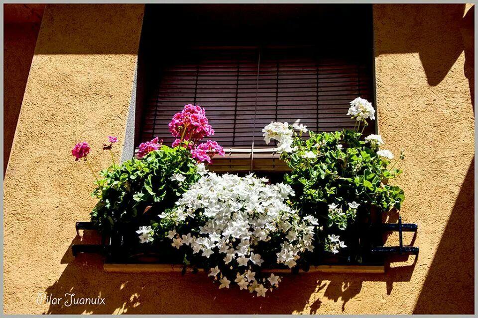 Flors a l'ampit de la finestra.