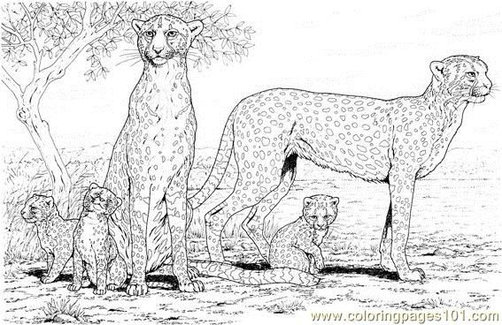 Cheetah coloring pages 09