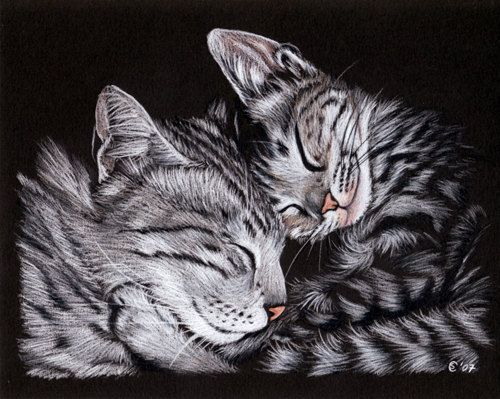 Kittens 2 Tabby Cat Grey Ginger Orange Tiger Kitty Drawing