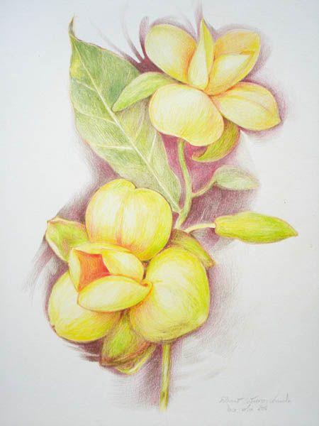 ผลการค นหาร ปภาพสำหร บ ภาพระบายส มายไนท Flower Pattern Design Prints Leaf Coloring Page Flower Coloring Pages