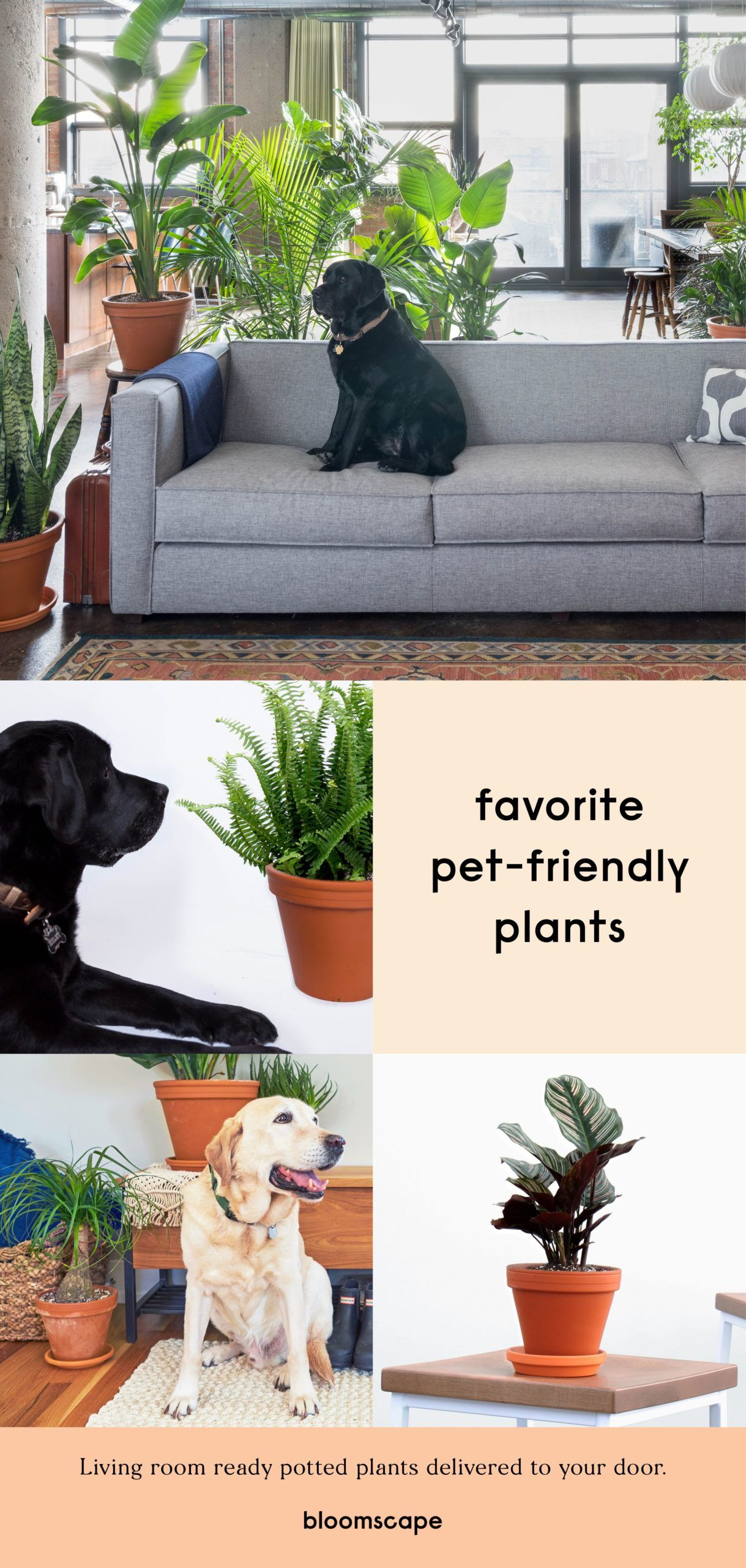 Shop Safe Indoor Plants For Cats And Dogs In 2020 Zimmerpflanzen Ideen Pflanzideen Wohnzimmer Pflanzen