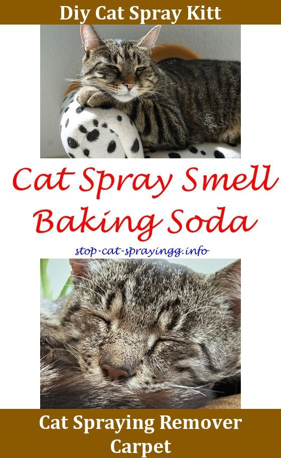 Spray To Make Cats Stop Peeing Male Cat Spraying Clean Up