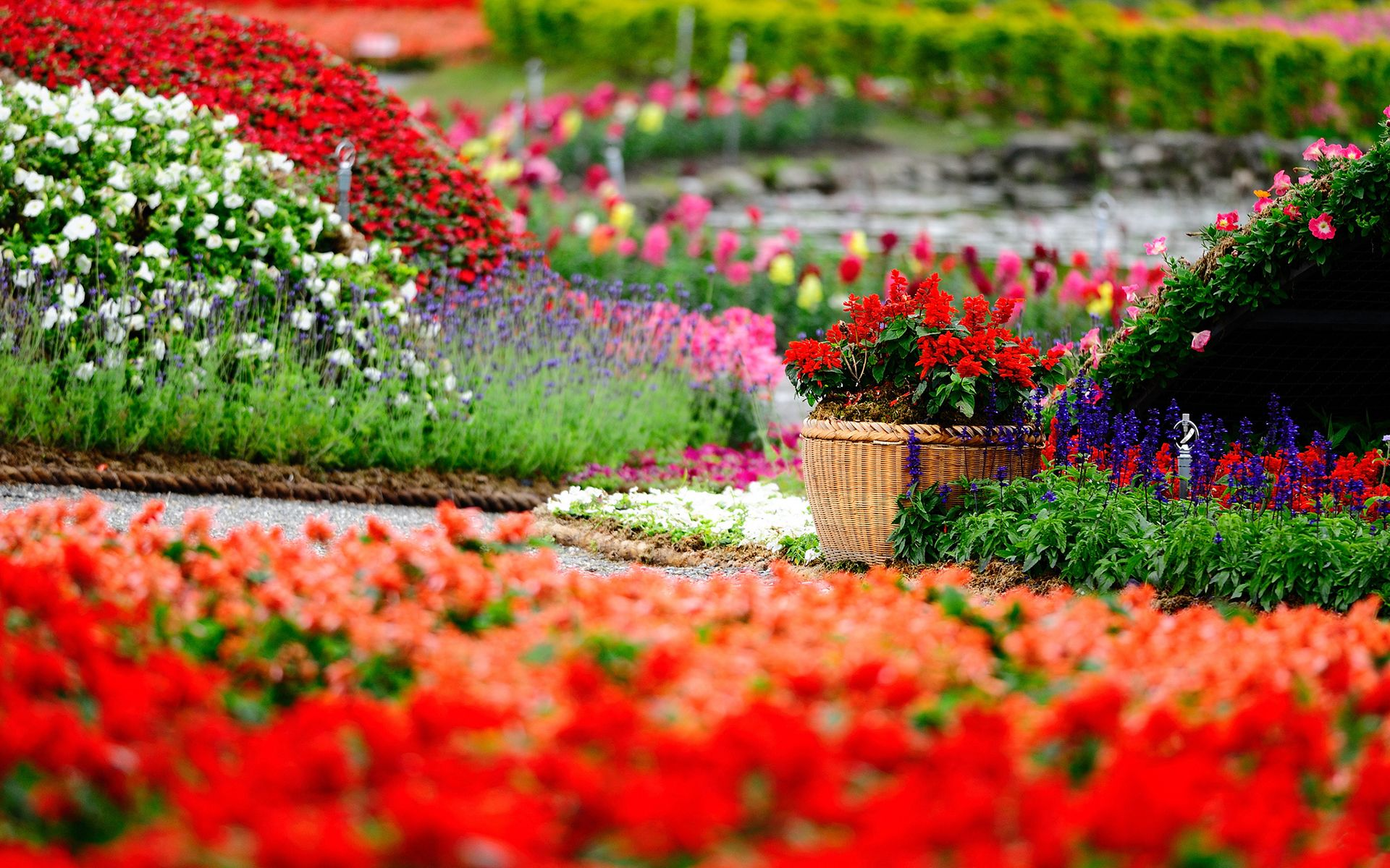 Colorful flower park wallpaper wide wallpaper beautiful images beautiful flowers wallpapers beautiful flowers desktop wallpapers 1369 and wallpapers izmirmasajfo Image collections