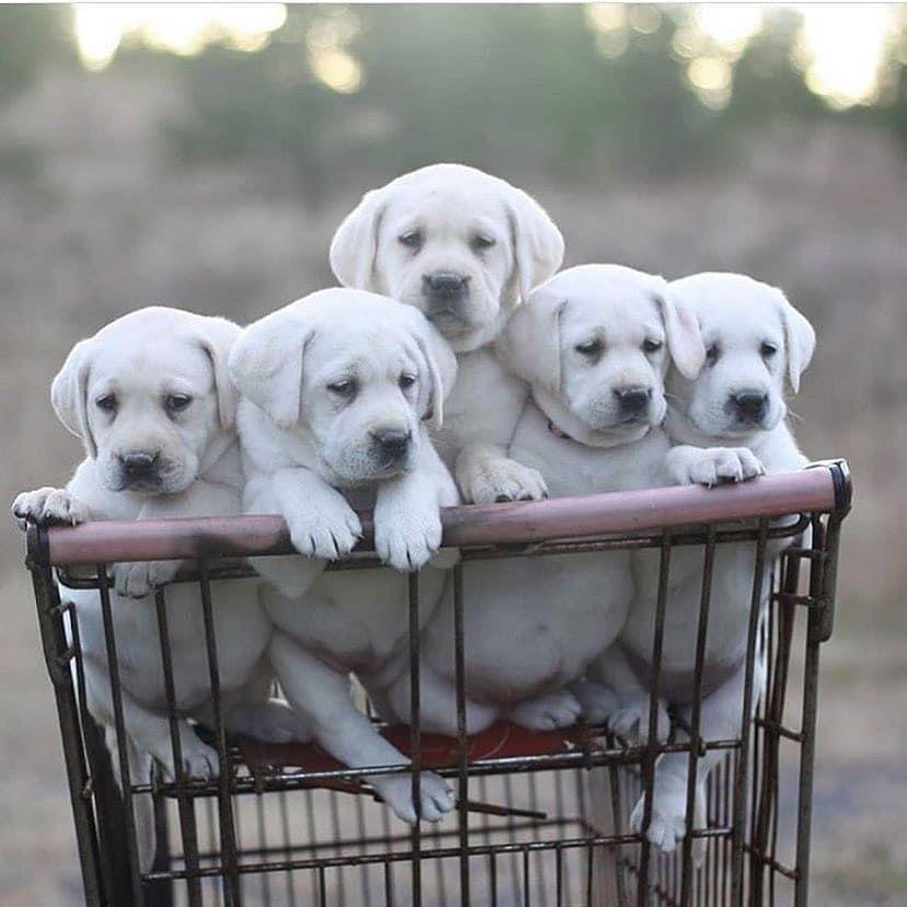 Image In Puppies 2 Collection By Luna De Antiguedades