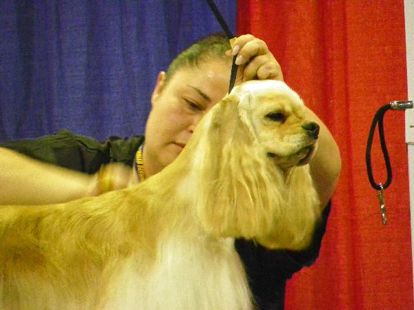 Super Zoo Regular Class Grooming Jpg 600 450 Super Zoo Dog