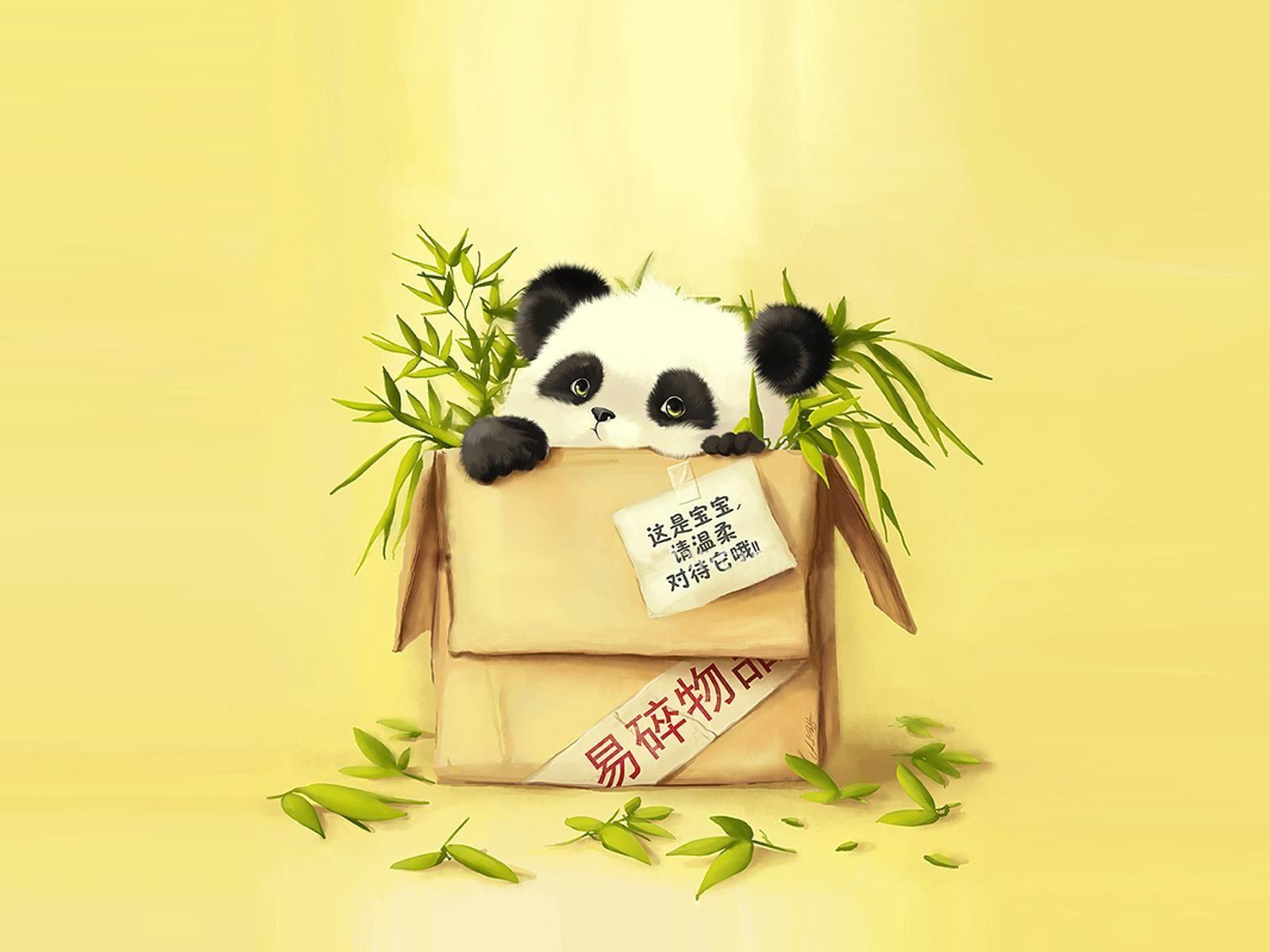 petit panda so cute