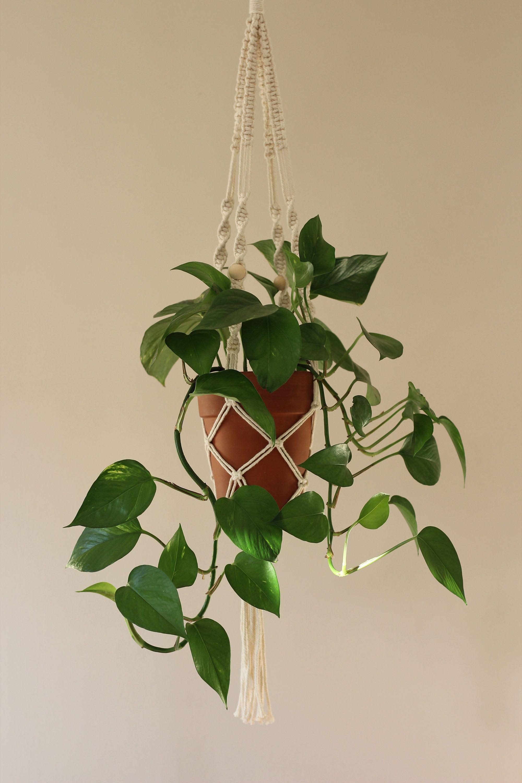 Macrame Indoor Plant Hanger Hanging Wall Planter Cream