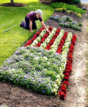 Love It American Flag Of Begonia Stripes An Ageratum Field Of Blue And Alyssum Stars Blue Flowers Garden White And Blue Flowers Flower Garden