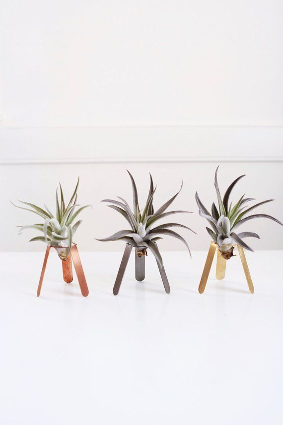 Tripod Air Plant Holder Display Desk