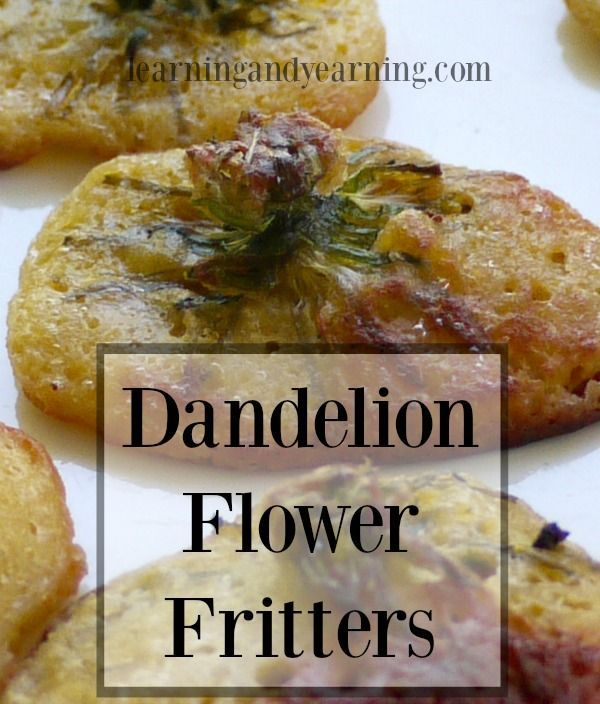 Homemade Dandelion Flower Fritters Recipe Dandelion Recipes Foraging Recipes Foraged Food