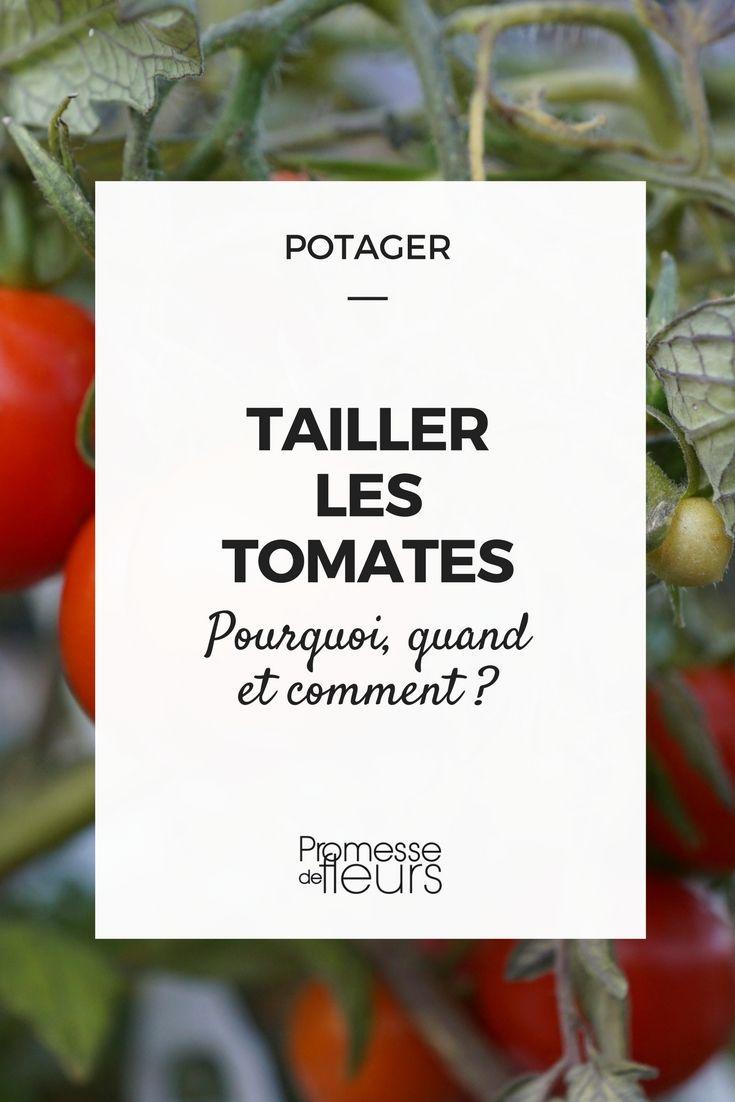 Tomate En Pot Conseil la taille des tomates et leur conduite | jardinage potager