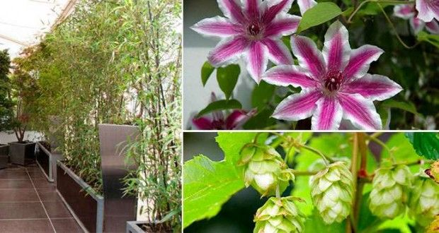 Plantas que crecen rapido flores Pinterest Gardens