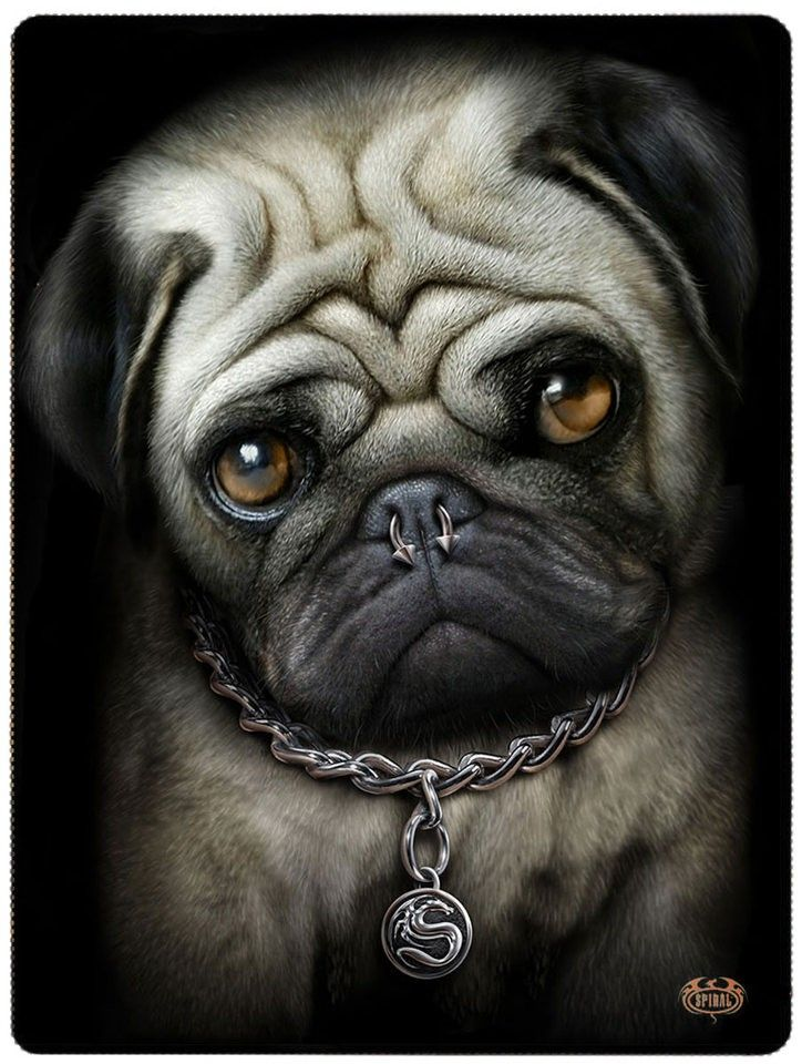 couvre lit street home Pug life   Couvre lit motif chien carlin   Plaid   150x200  couvre lit street home