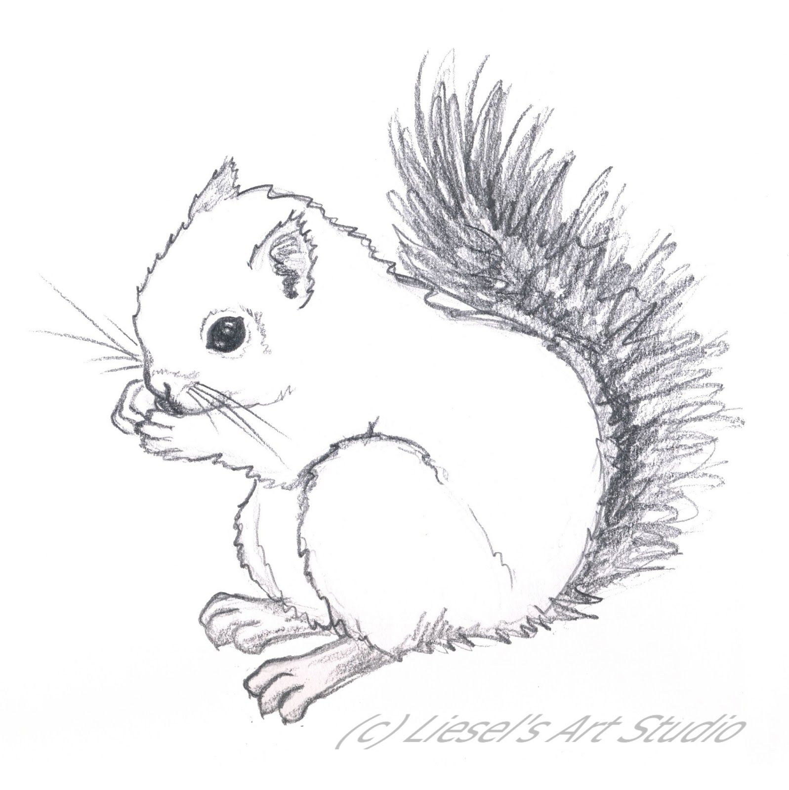 Image result for baby squirrel drawing Drawings, Art
